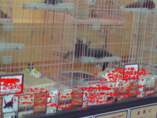 ソマリ猫そま吉のブログ